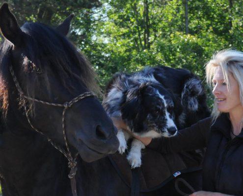 Kontakt - Horse in Harmony hos Ute Lehmann
