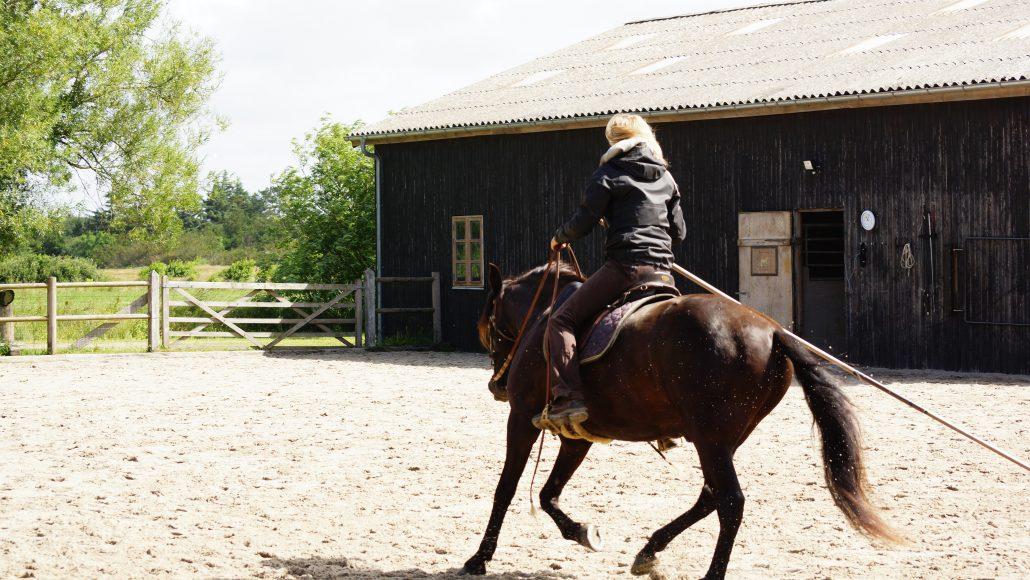 størrelse af hest pennis